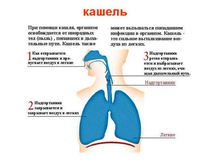 Сухий кашель лікування в домашніх умовах