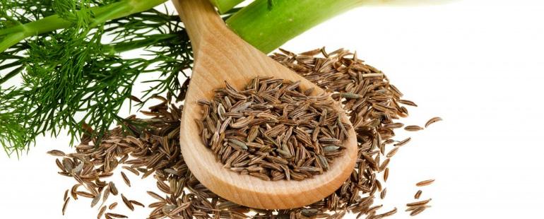 Як заварювати насіння кропу при циститі